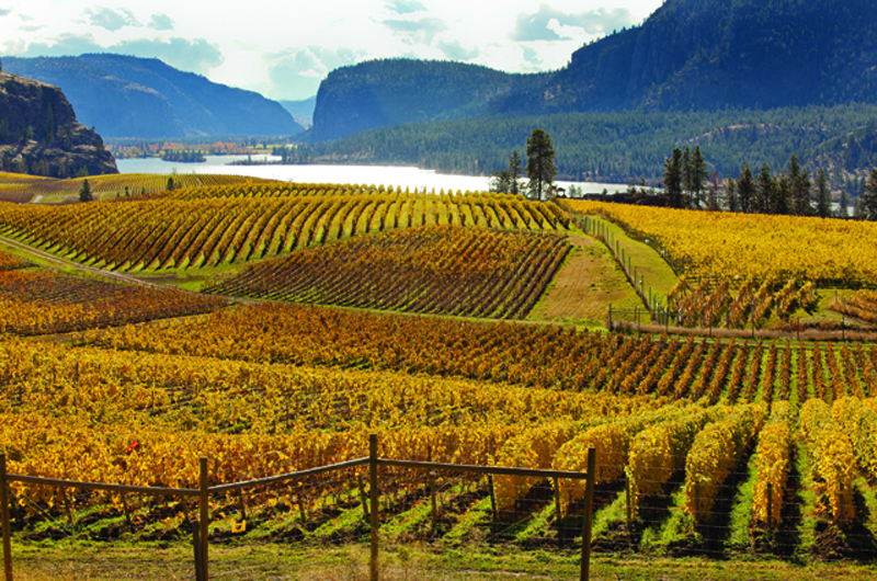 Discover why south okanagan is canada 39 s premier region for for Affitti di cabina okanagan bc